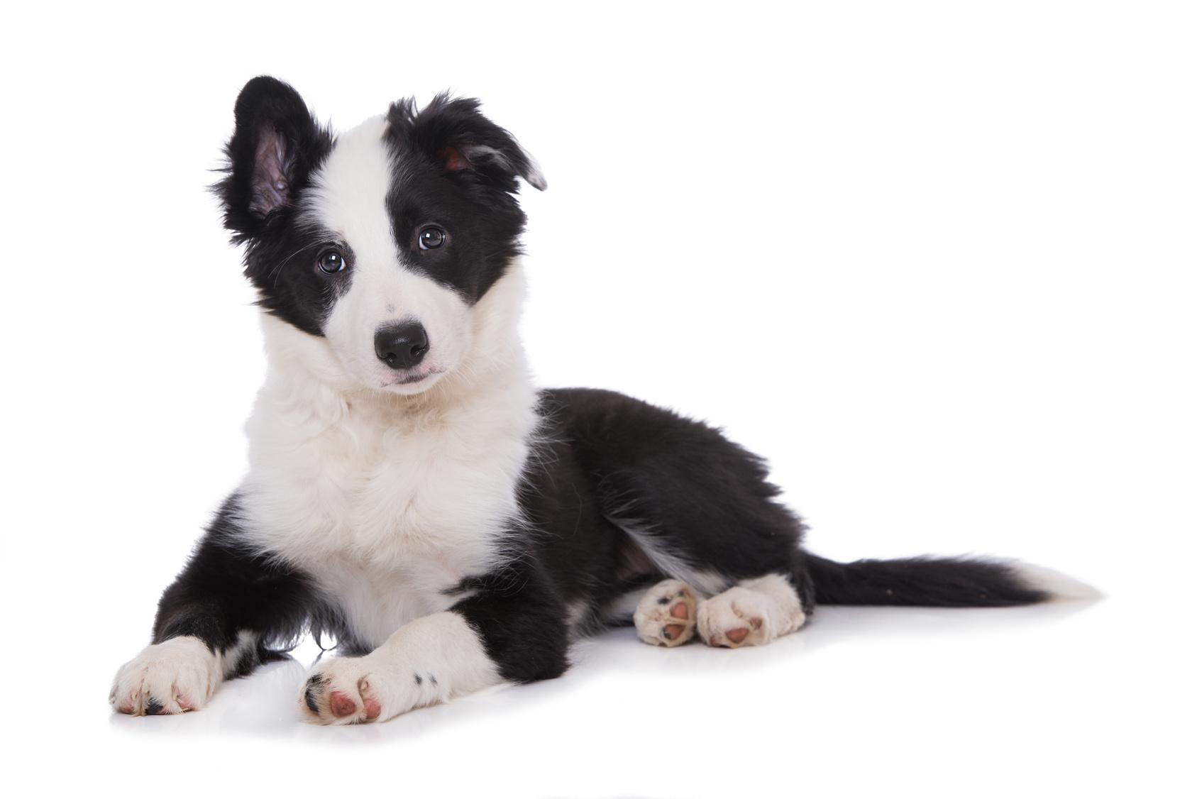 À quoi sert une médaille pour chien?